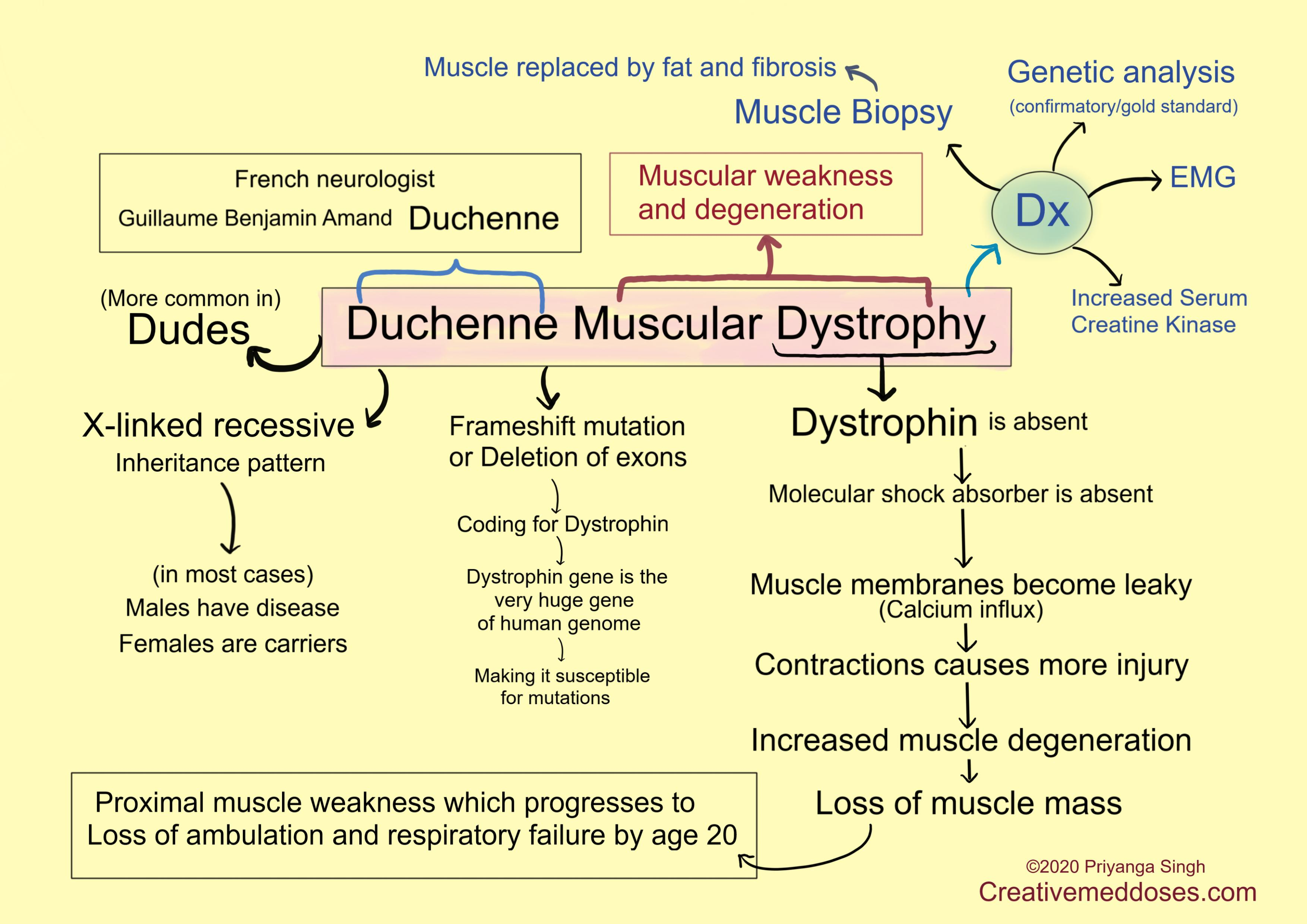 Duchenne muscular dystrophy illustrations - Creative Med Doses